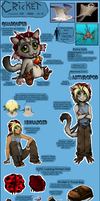 Ex10 - Cricket Reference Sheet by Nestly
