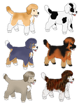 Adoptable Poodle Pups by J4-Coltrain