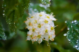 waterdrops by PaalM