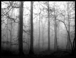 in the woods 3 ... by Wundenkuessen