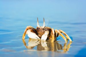 Crab on the tropical beach by MotHaiBaPhoto