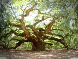 Angel Oak by shoogerfree