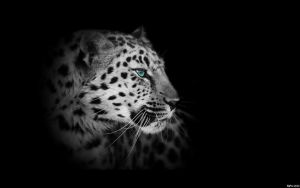 EgFox LeoparD10 blue eye HD by Eg-Art