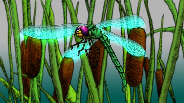 Dragonfly by ziorker