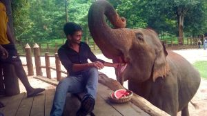 Patient and lazy nice elephant 2 by VerdePolpo