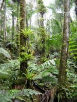 Sierra Palm Rainforest on El Yunque i by Forest-Imp