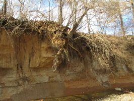 Uprooted Tree Hanging Ove The Stream by GothicRockerGirl
