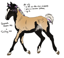 1116 Padro Foal Design for Feya-san by KimboKah