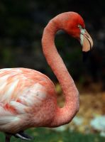 Pink Flamingo by deadrose333