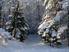 Snowy Landscape Background 05 by FantasyStock