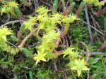 Funny moss flowers by MCarax