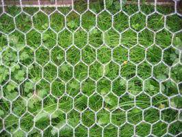 Chicken Wire - aphasia100stock by aphasia100stock