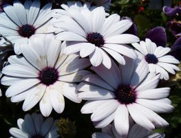 Brilliant white flowers by Ripplin