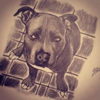 Pitbull Sketch by Only1Stevey