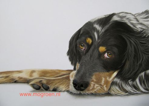 Drawing of a Sweet dog by mo62