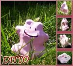 A Wild Ditto Appeared by Cee-Seven