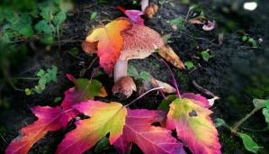 Autumn mushrooms  by gintautegitte69