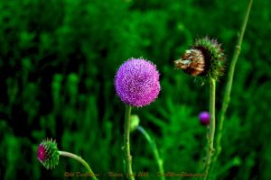 00-Nature-June2015-SAM-0963-HDR-WP-Master by darkmoonphoto