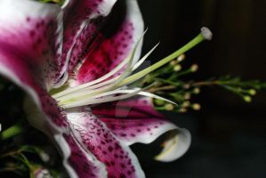 Pink Lily by OriginaLeaDesigns