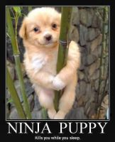 ninja puppy by jay4gamers1