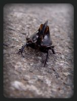 insect 1 by Steffan