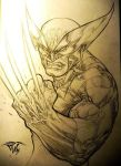 Wolverine the immortal by pant