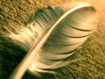 Feather by zoom-from-inside