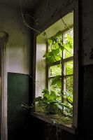 The green window by ohlopkov
