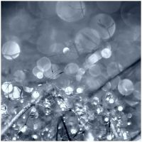 drops and light by joanneanne