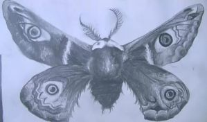 a moth for gcse art by abtheartist