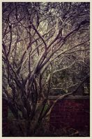 iPhoneography EX-Land by Gerald-Bostock