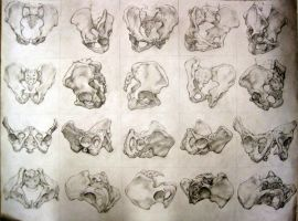 pelvis by hankliu