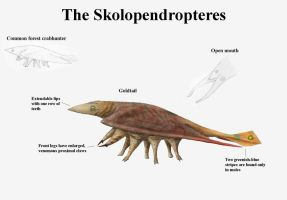 REP: The Skolopendropteres by Ramul
