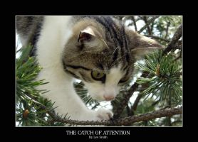 The catch of attention by lmsmith