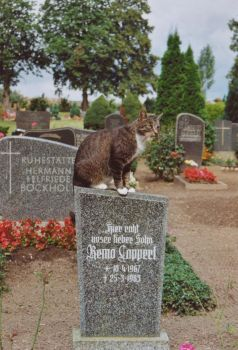 The cat on the cool tomb stone by bigunknown
