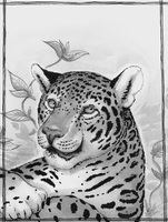 Jaguar - Black and White by Camelid