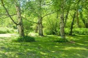 Three Trees in a Grove by happeningstock