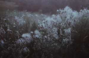 meadows by laura-makabresku