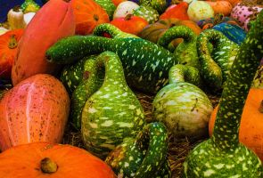 gourds 1 by ChasMandala