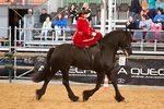 Sidesaddle Friesian_9 by CalyHoney