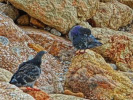 pigeons on the rocks by BL00DYSunflowers