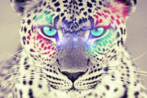 Colorful Leopard by Fepame