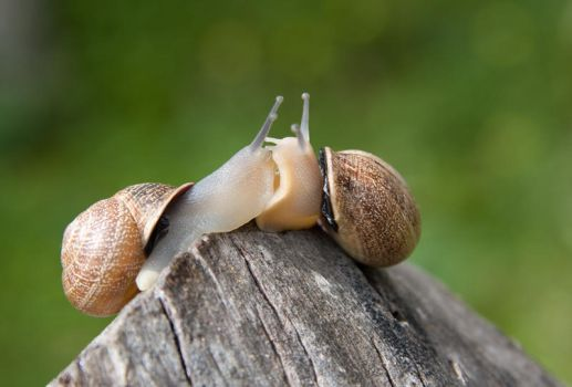 Snails in love by sulclip