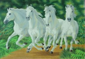 Four white stallions by LindaColijn