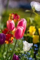 The Colourful Garden by NXcamera