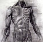 anatomy study by keys307a