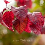 leaf-02 by georges-dahdouh