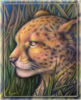 Cheetah in the grass by OmegaLioness