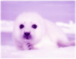 cute baby seal by Zutarafan4321