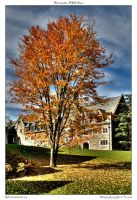 Princeton HDR Tree by yellowcaseartist